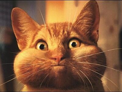 Kočička - klikni  > další Fotka