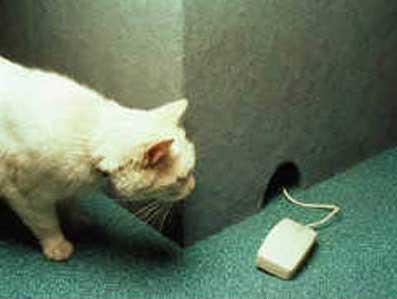 Kočka a myš - klikni  > další Fotka