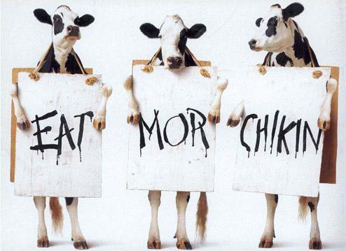Jezte kuřata - klikni  > další Fotka