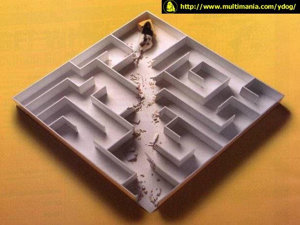 Hladová myš - klikni  > další Fotka