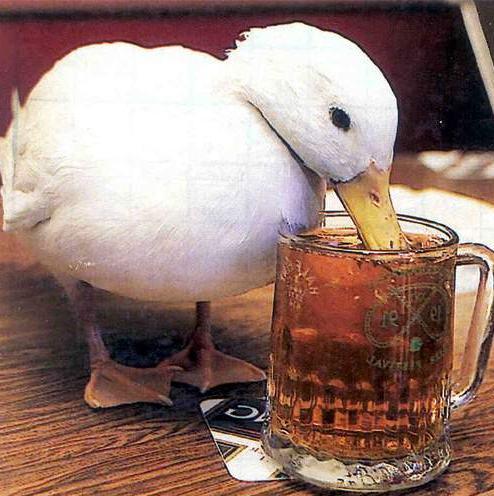 Kachna a pivo - klikni  > další Fotka