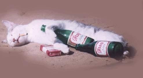 Alkoholik - klikni  > další Fotka