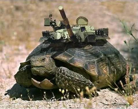 Obrněná želva - klikni  > další Fotka