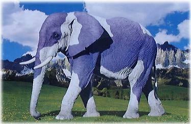 Slon - klikni  > další Fotka