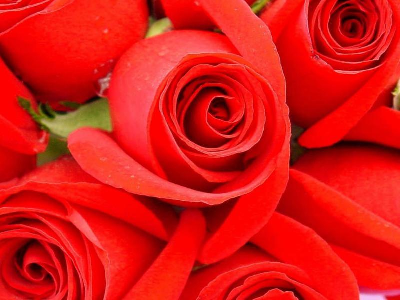 0350_E1ffO.jpg